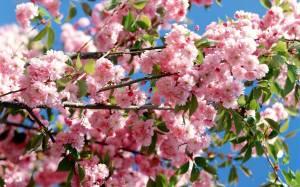 fiori-primaverili_O1