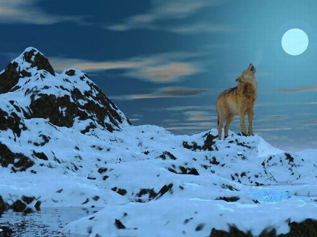 lupo-con-luna