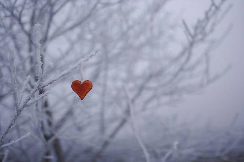 cuore-e-ghiaccio