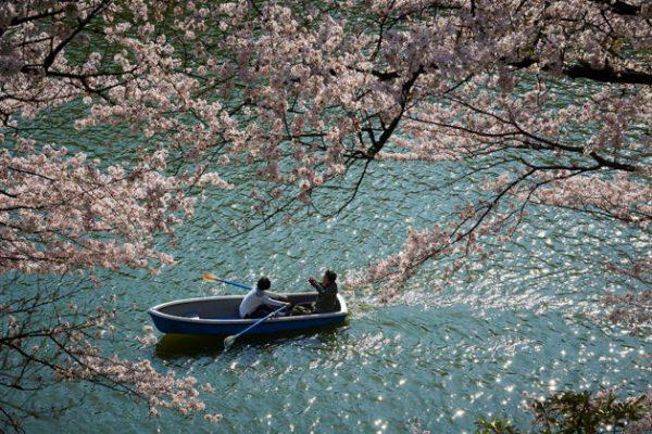 CTCVB_Tokyo-hanami_fioritura-ciliegi-2-629x420