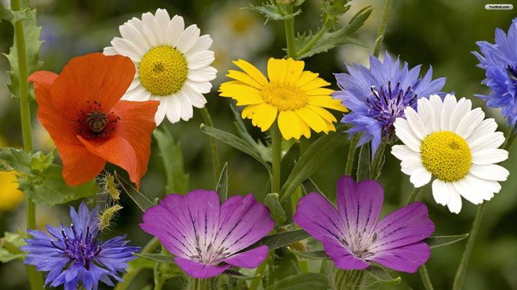 fiori-primaverili_NG4